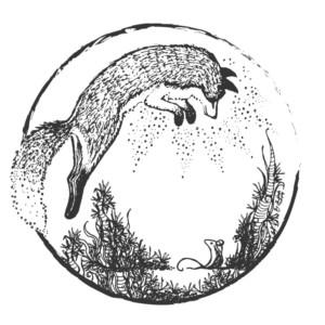 FOXCRAFT5